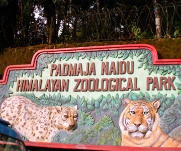 Padmaja_Naidu_Himalayan_Zoological_Park_in_Darjeeling