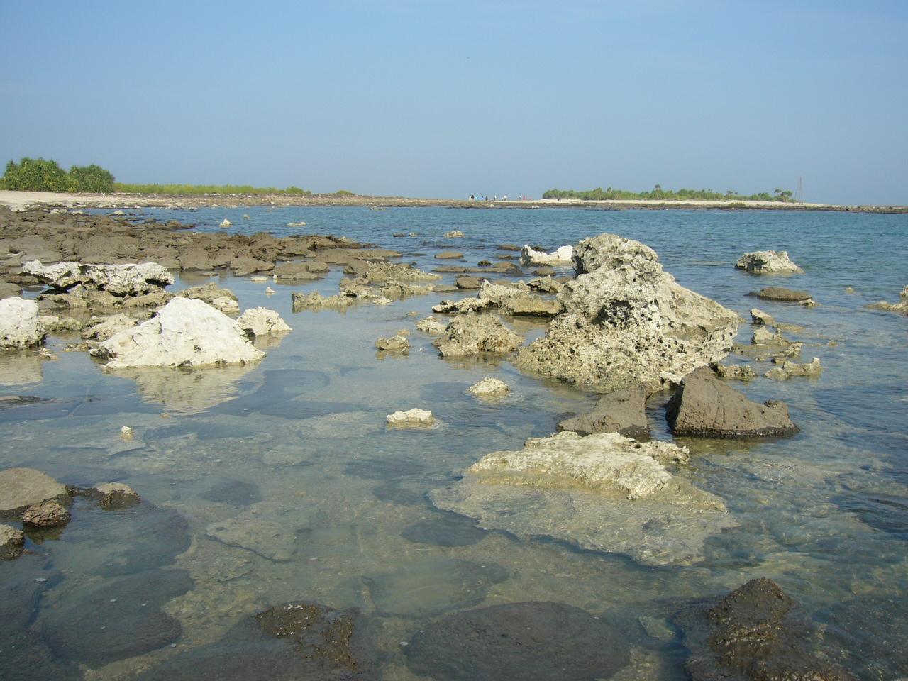 St_Martin_Island_Corals