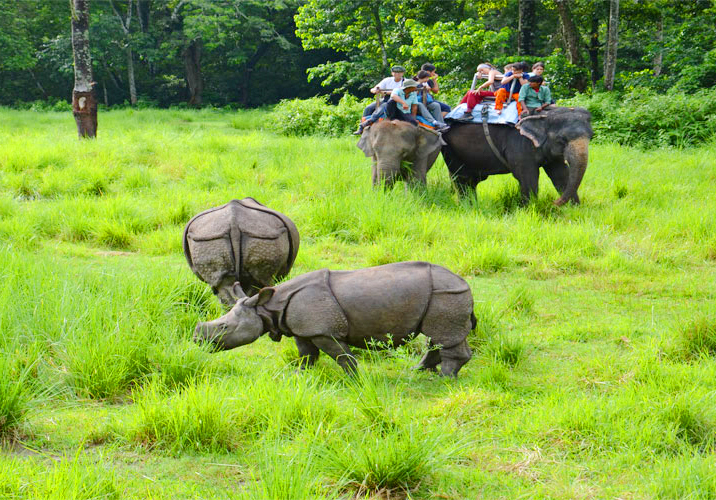 Chitwan Elephant Safari