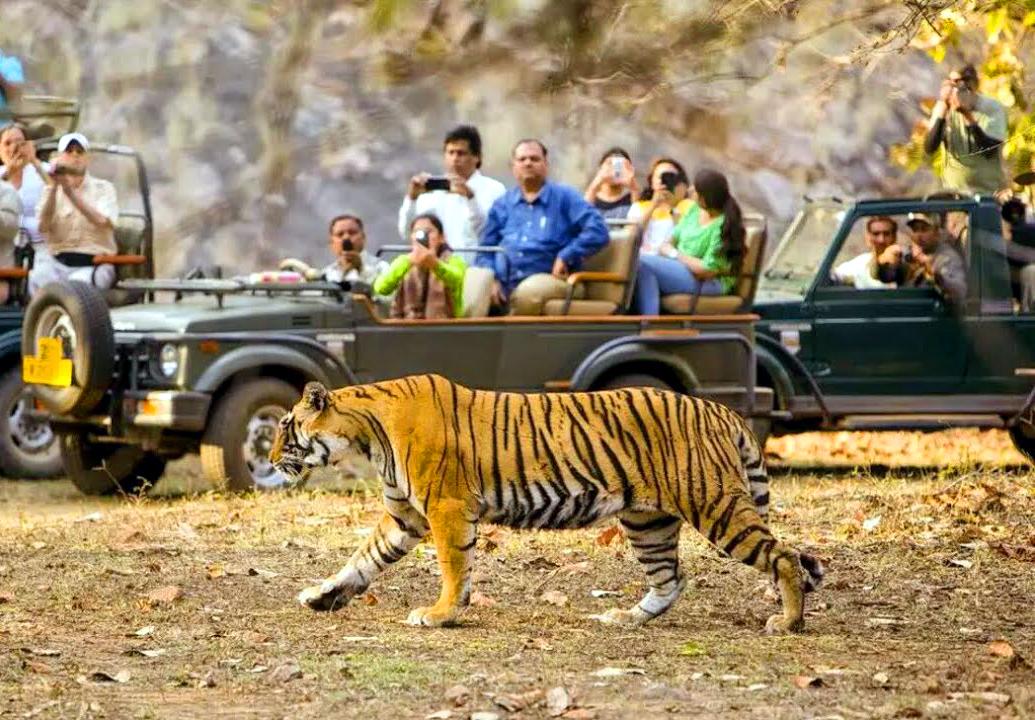 Chitwan Jeep Safari